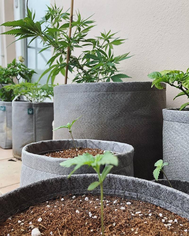 fabric-pots-freedom-farms-za