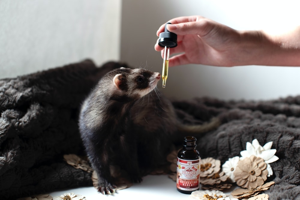 CBD Oil for Pets in South Africa