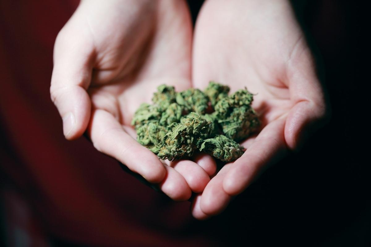 Holding cannabis