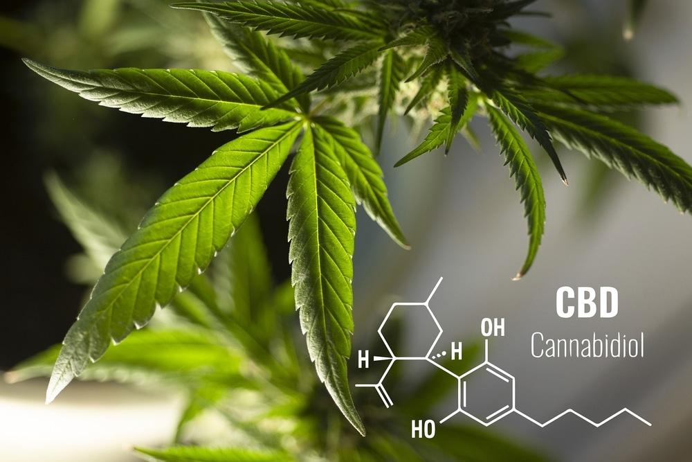 Cannabis leaf with cannabidiol compound