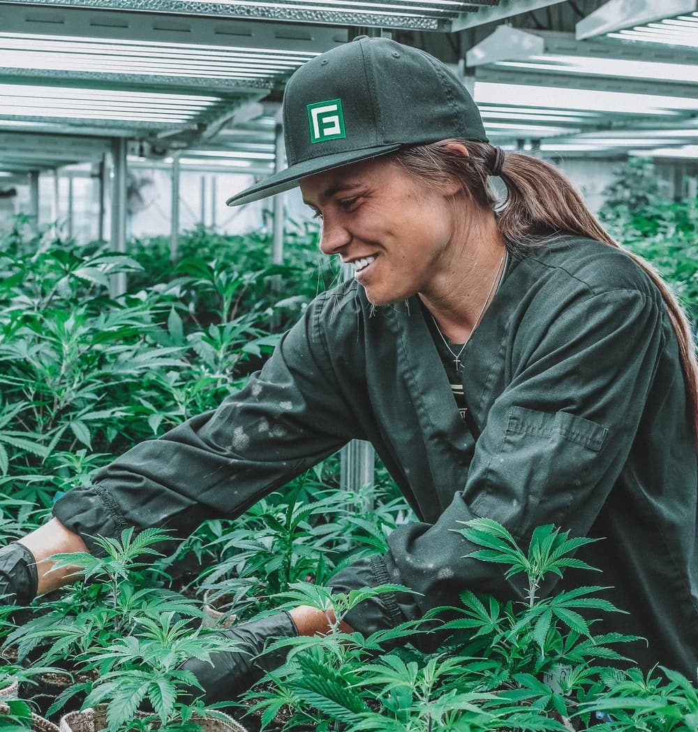 Worker tending to plants in medical cannabis facility