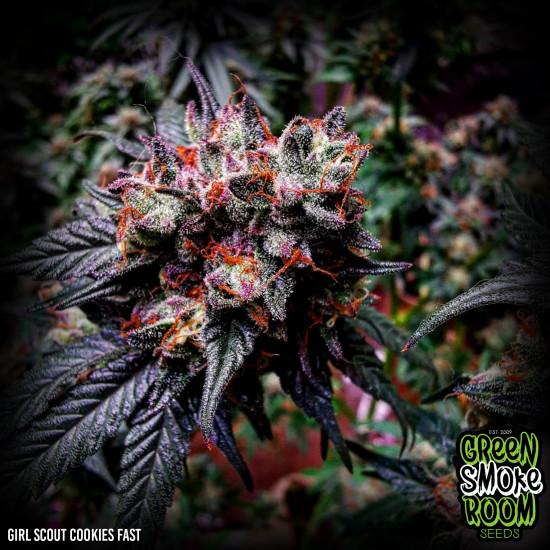 Green Smoke Room Seeds - Super Gorilla Cookies